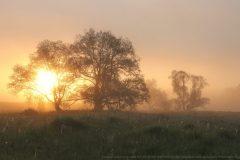 Утренний-туман-в-Рузе-scaled