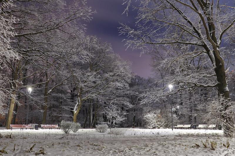 Парк Дубки зимой